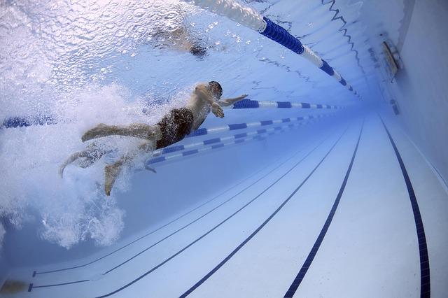 לימודי שחיה