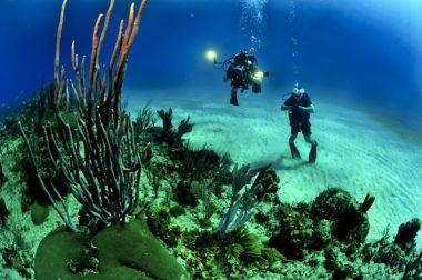 קורס צלילה סקובה דייבר – הכירו את העולם שמתחת למים